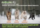 3-х месячный трансформационный онлайн-курс Личной Эволюции и