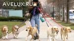 Дрессировка собак Невский район