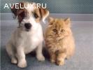 Купить : Ветеринария.Биокорректоры для здоровья всех животны
