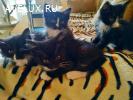 Маленькие котятки ищут дом