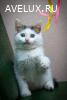 Маленький голубоглазый кошачий ангел Скайрим ищет свою семью