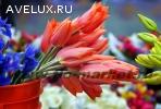Оптовая торговля цветами