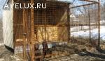 передержка для собак в Туле