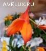 Продаю орхидеи и антуриумы.