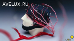 Реоэнцефалография головных артерий