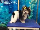 Стрижка собак, котов и кошек