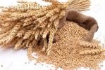 Закупаем зерновые,бобовые,масличные